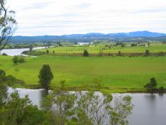Taree photo 3